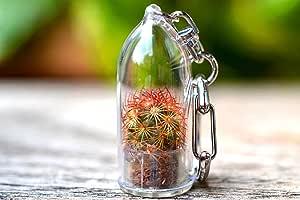 Copper King Cactus Terrarium Keychain Accessory. Cactus Gift.