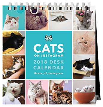 Gatos en Instagram escritorio calendario 2018: Amazon.es: Oficina y papelería