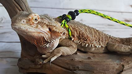 Amazon.com : Adjustable Reptile Leash Harness Great for Reptiles or