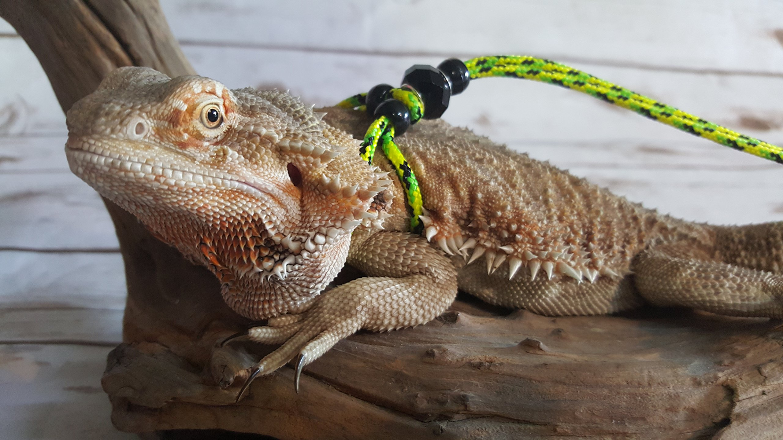 Adjustable Reptile Leash Harness Great for Reptiles or Small Pets - 100% Adjustable Most Sizes (6 Feet)