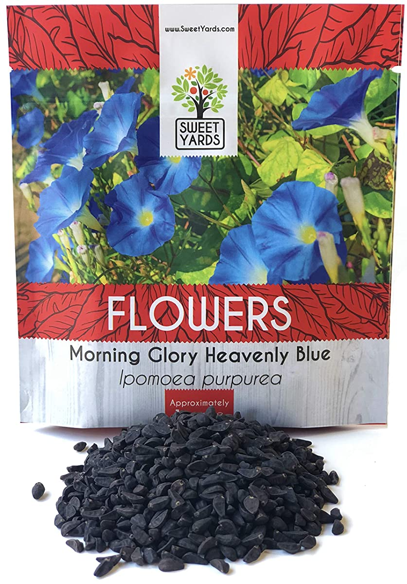 Morning Glory Seeds Heavenly Blue - Large 1 Ounce Packet - Over 1,000 Flower Seeds