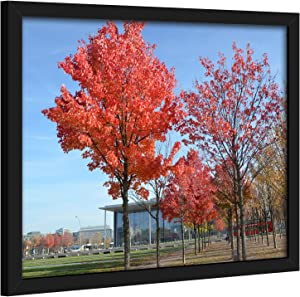 Medog 11x14 Photo Picture Frames Black Without Mat to Display Pictures 11 by 14 Inch 8x10 9x11 8x10 7x11 with Mat(not Include) Wall Mounting Document Certificate Frames (P1G 1P BA)