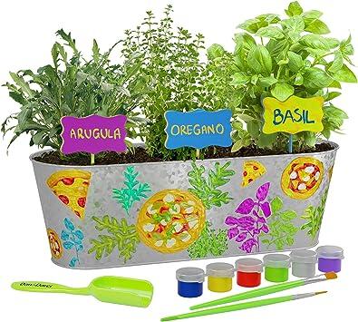 Dan&Darci Paint & Plant Pizza Herb Growing Kit - Grow Basil ...