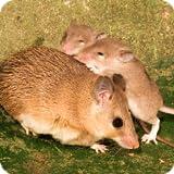 Mouse Family Sim