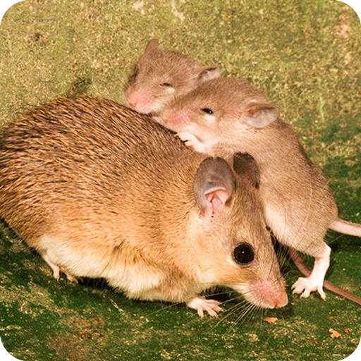 Mouse Family Sim
