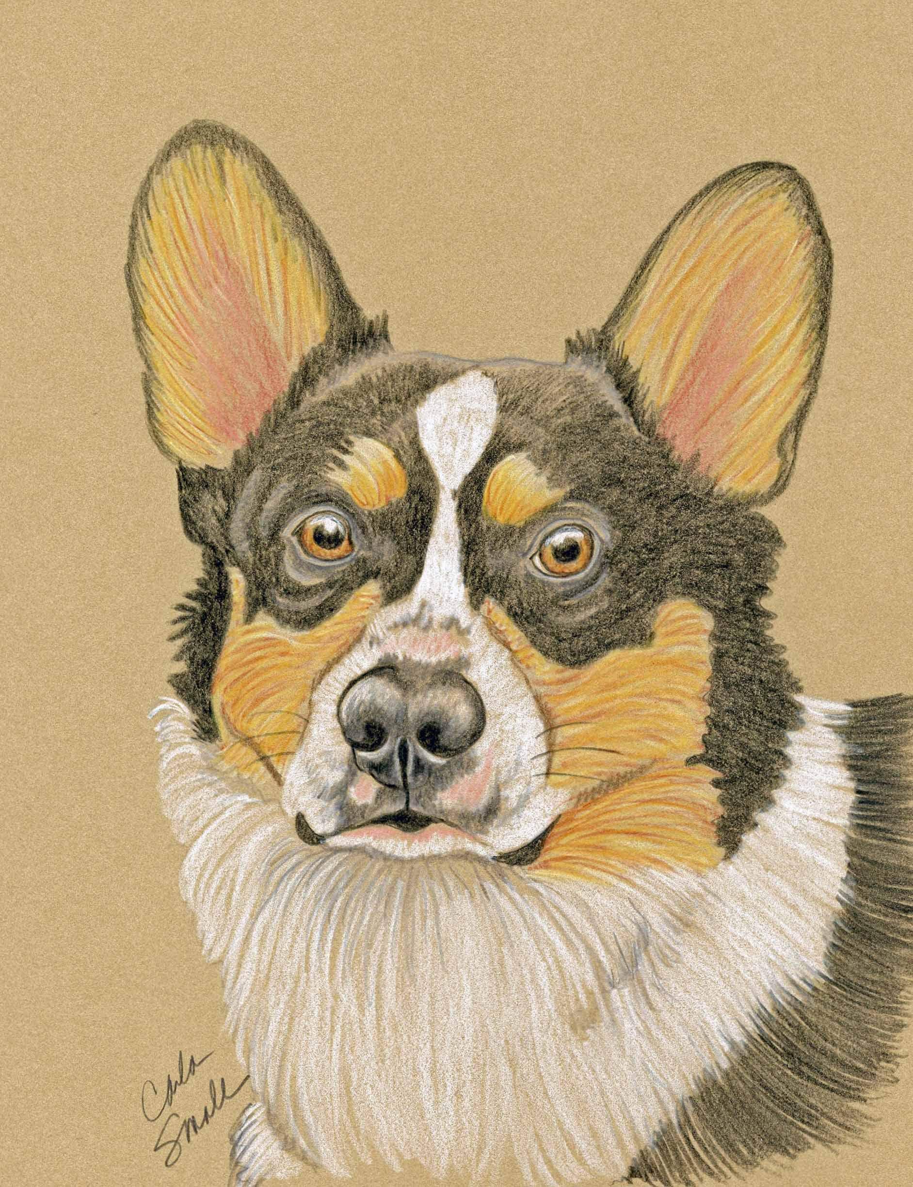 Welsh Tri-Color Corgi Original Drawing 6 x 8 Dog Pet Art -Carla Smale
