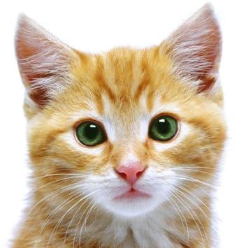 cat wallpaper phone app