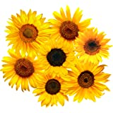 StikArt Removable Sunflowers Wall Decals Printed on Waterproof Canvas (45 Flowers)