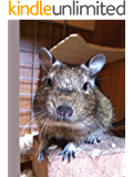 The Degu Diaries (English Edition)