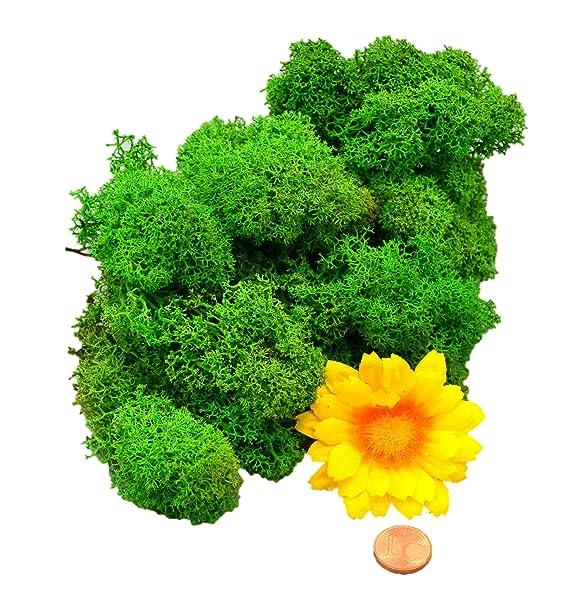 Muwse Islandmoos 1AV 25g Grün vorgereinig, präpariert & gefärbt! Weich, lichtecht & haltbar! Unser günstiges Dekomoos Florist