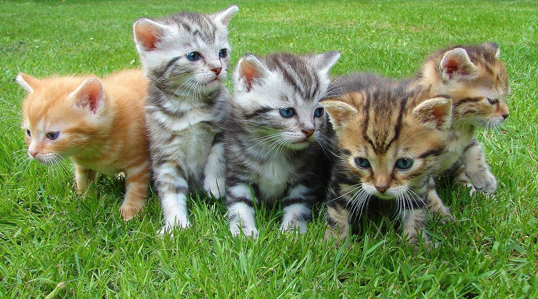 Tranquilizante para gatos   CATLY CHILL  100% biológico spray para gatos   Con extracto de menta para gatos  Nepeta Cataria   Aerosol relajante ayuda a ...