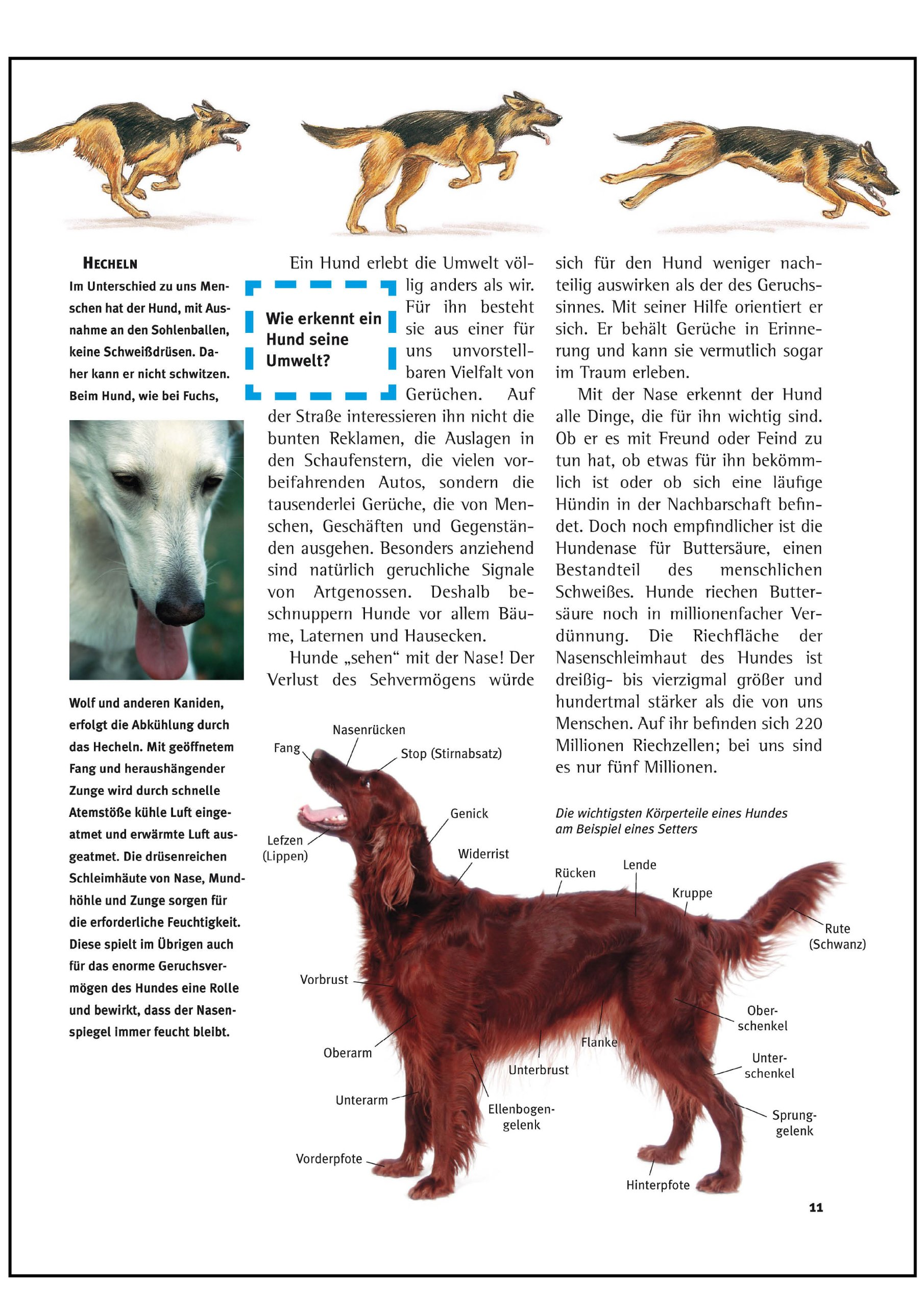 Ausgezeichnet Hund Körperteile Anatomie Fotos - Menschliche Anatomie ...
