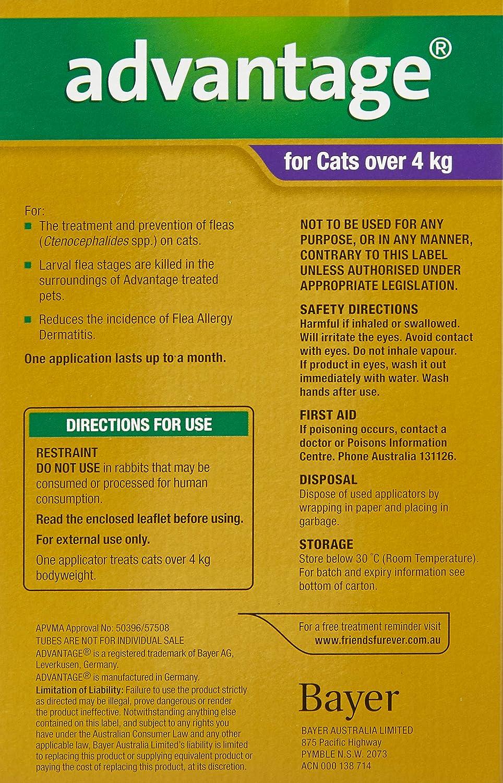 Ventaja 80 mg solución Spot-on para gatos grandes y Pet (más de 4 kg), diseño de conejos: Amazon.es: Productos para mascotas