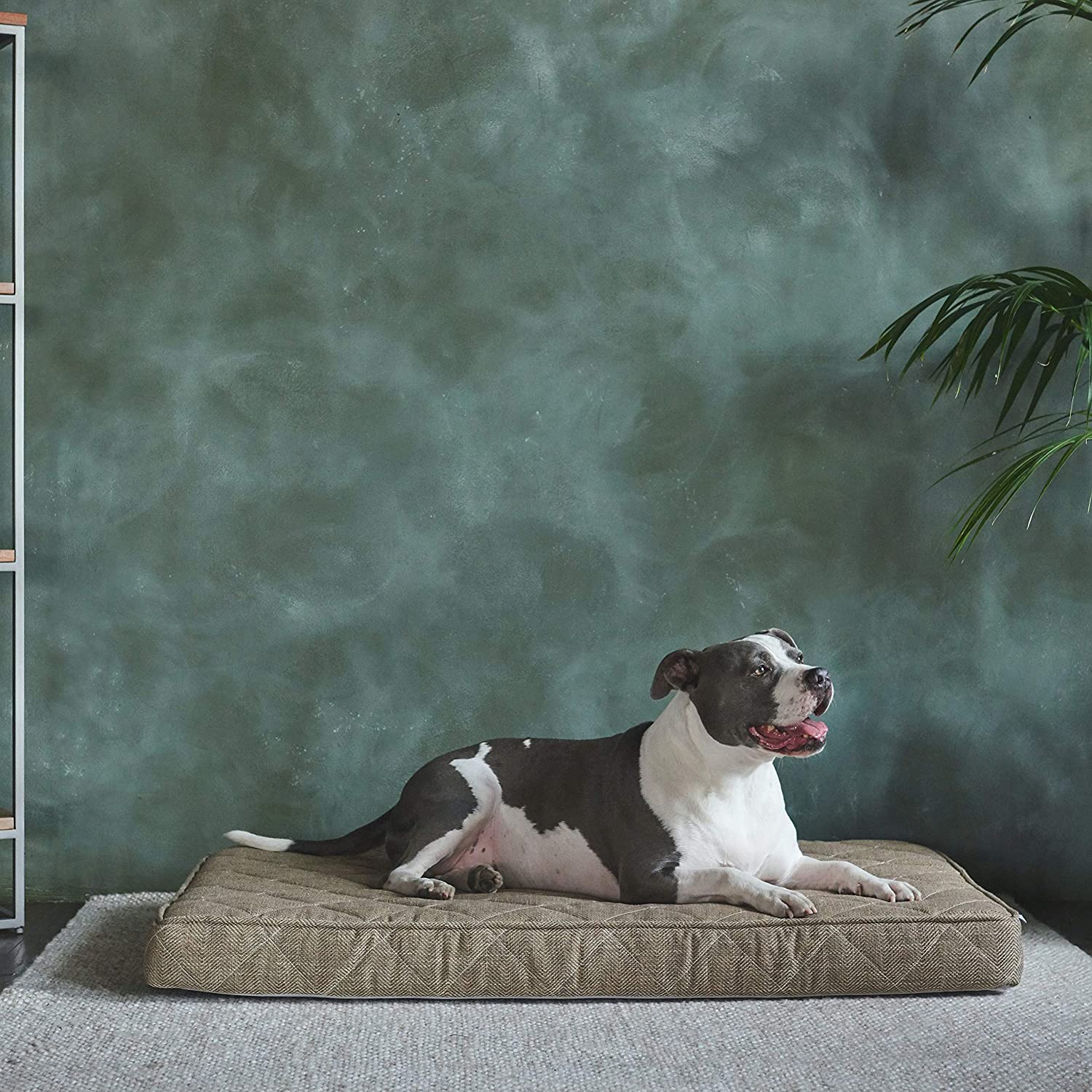 Brentwood Home Griffith Orthopedic Dog Bed - Cooling Gel Memory Foam with Washable Cover and Waterproof Liner, for Cats and Dogs, Made in California, Sandstone, Size X-Large