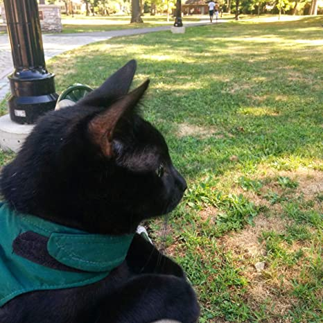 Mynwood - Arnés para Gato, Color Verde