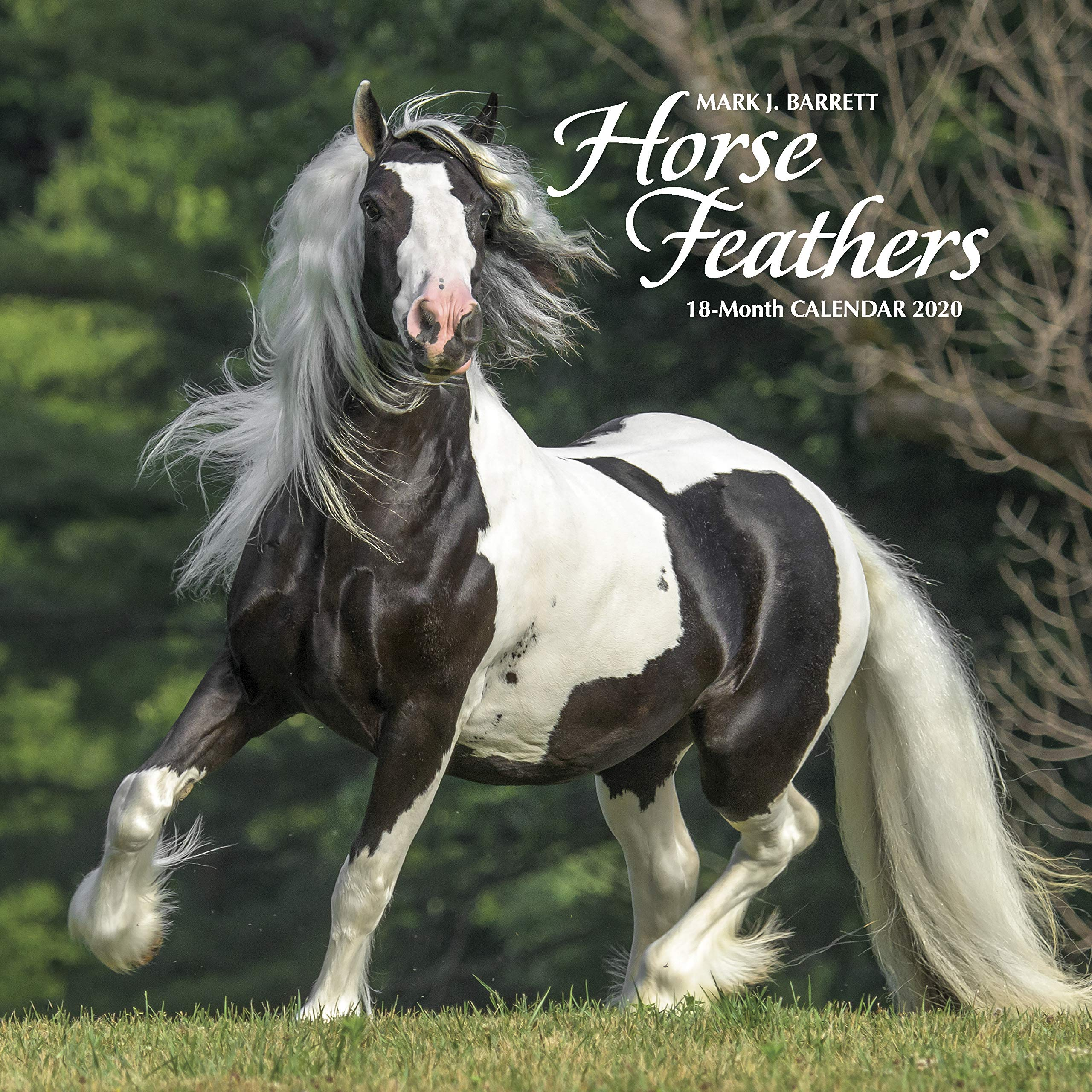 Horse Calendar 2020 Horse Feathers 2020 Wall Calendar: Willow Creek Press