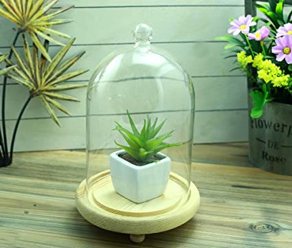 Buy Glass Terrarium With Wooden Base Online At Low Prices In India