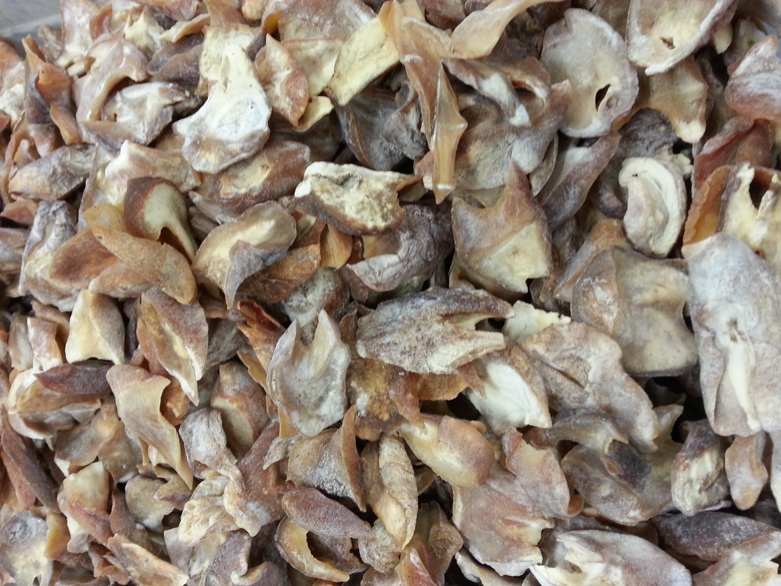ERLIN African natural sun dried top shell pieces 80pcs/lb (1 LB)