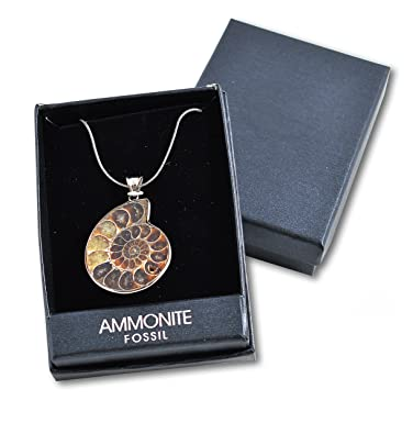 Genuine fossilised ammonite pendant millions of years old genuine fossilised ammonite pendant millions of years old aloadofball Images