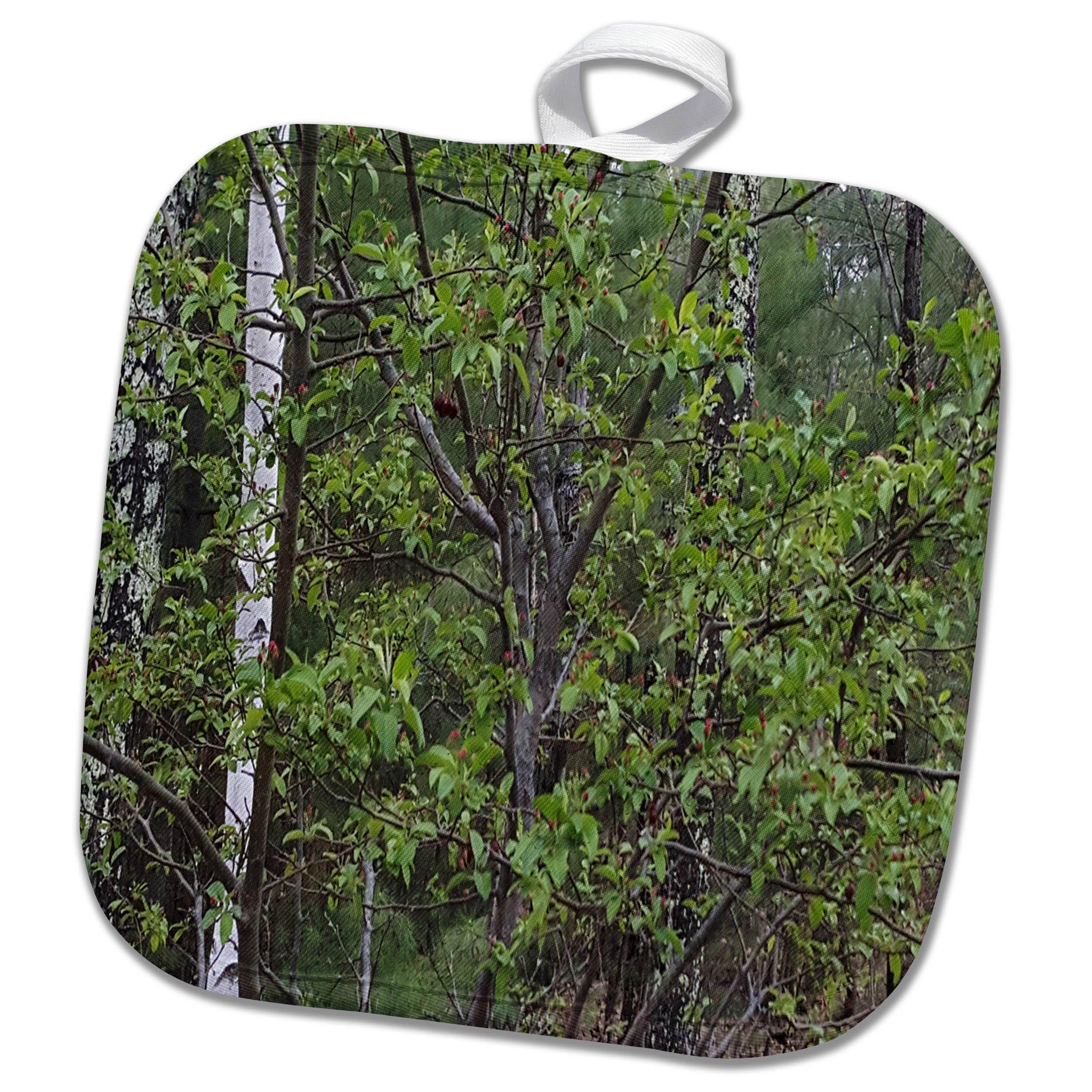 3dRose TDSwhite – Spring Seasonal Nature Photos - Trees First Spring Leaves Woods - 8x8 Potholder (phl_284332_1)