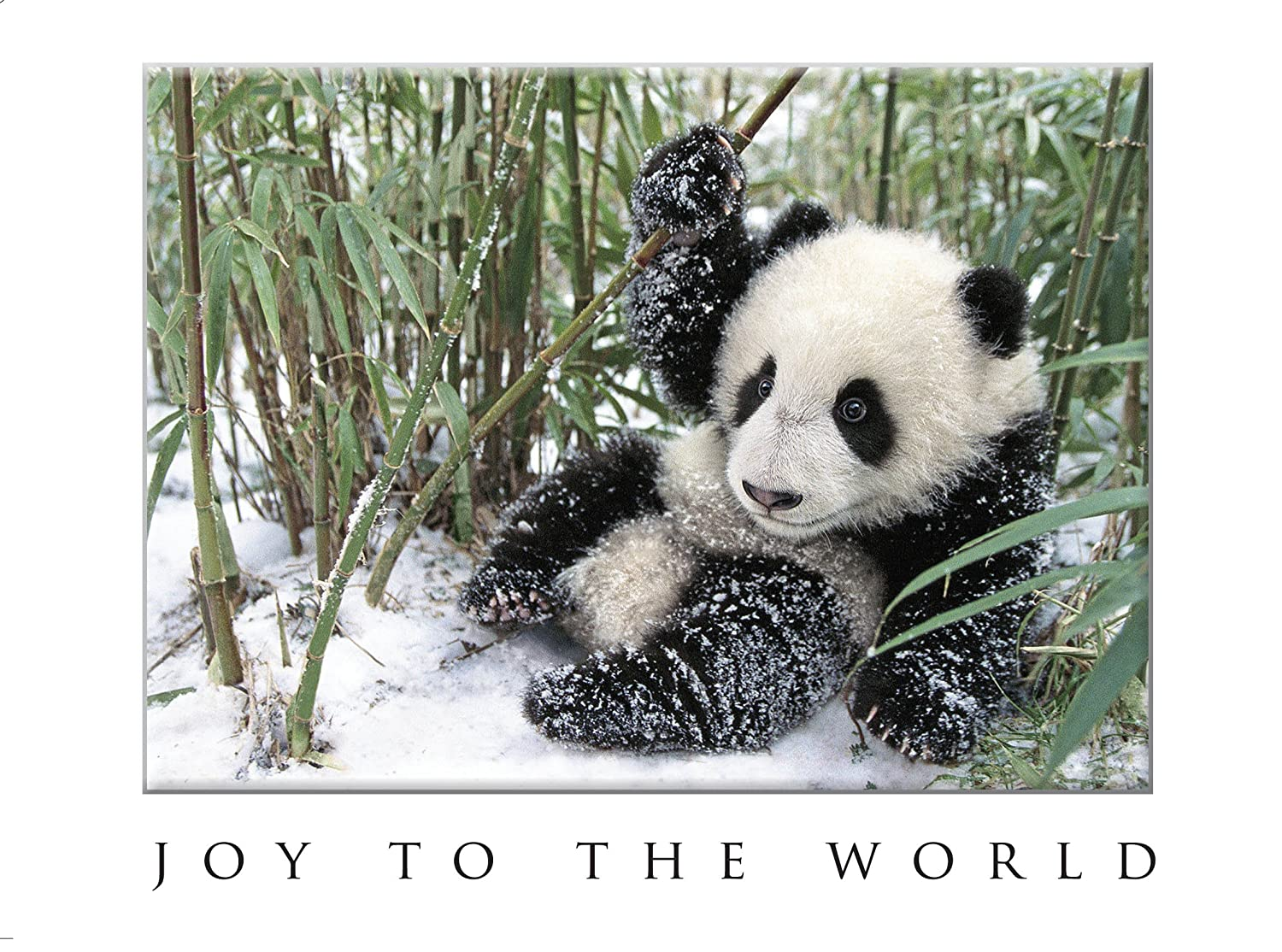 Bamboo panda christmas cards amazon office products kristyandbryce Gallery