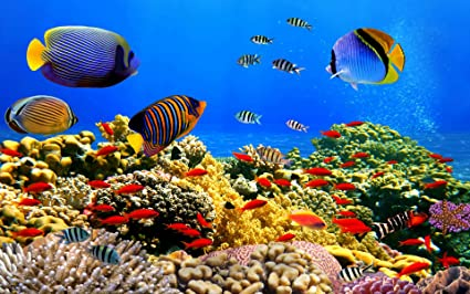Posterhouzz Fish Fishes Underwater Ocean Tropical Coral Reef Plant Colors Colorful Wall Poster