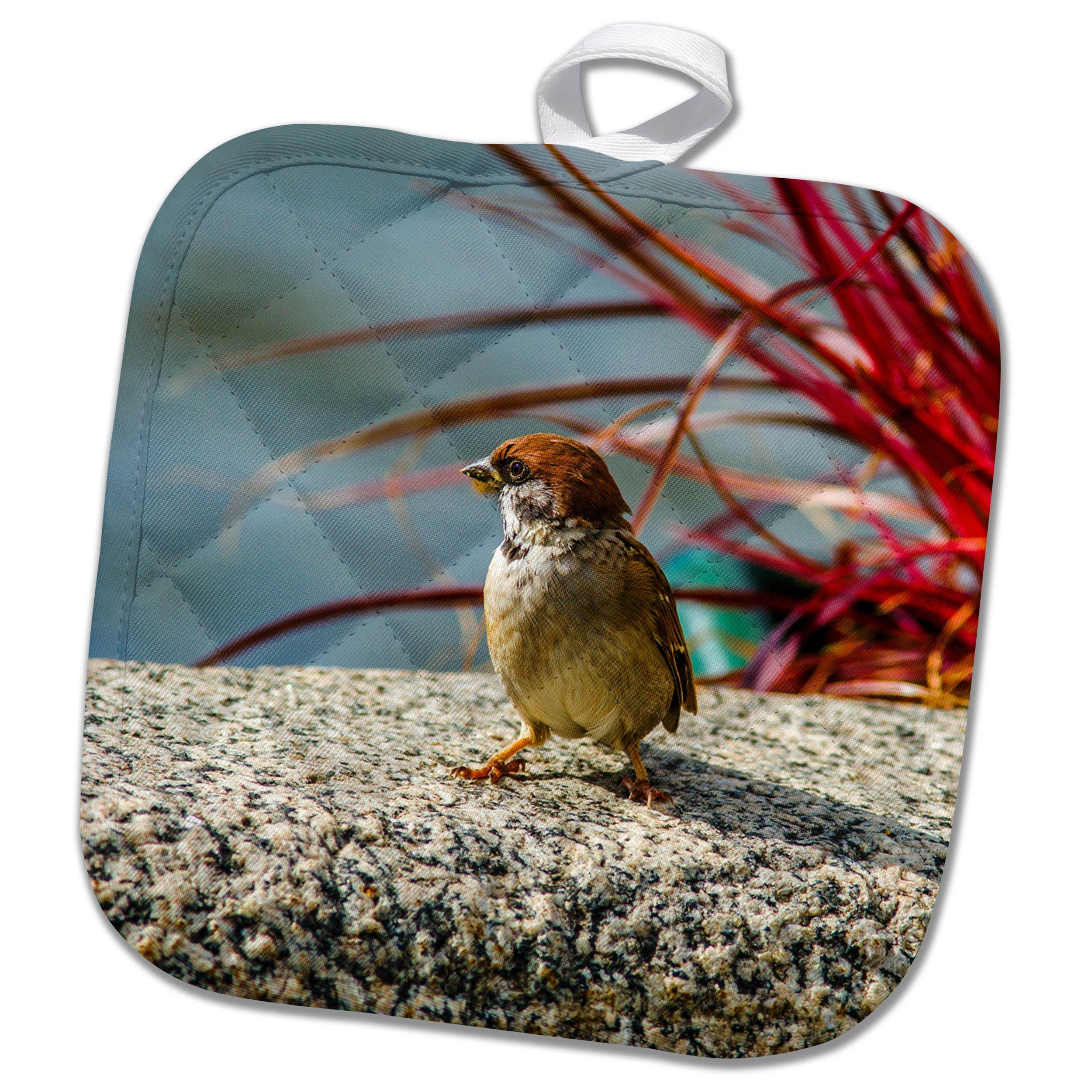 3dRose Alexis Photography - Birds - House sparrow by appearance. Eagle at heart - 8x8 Potholder (phl_267217_1)