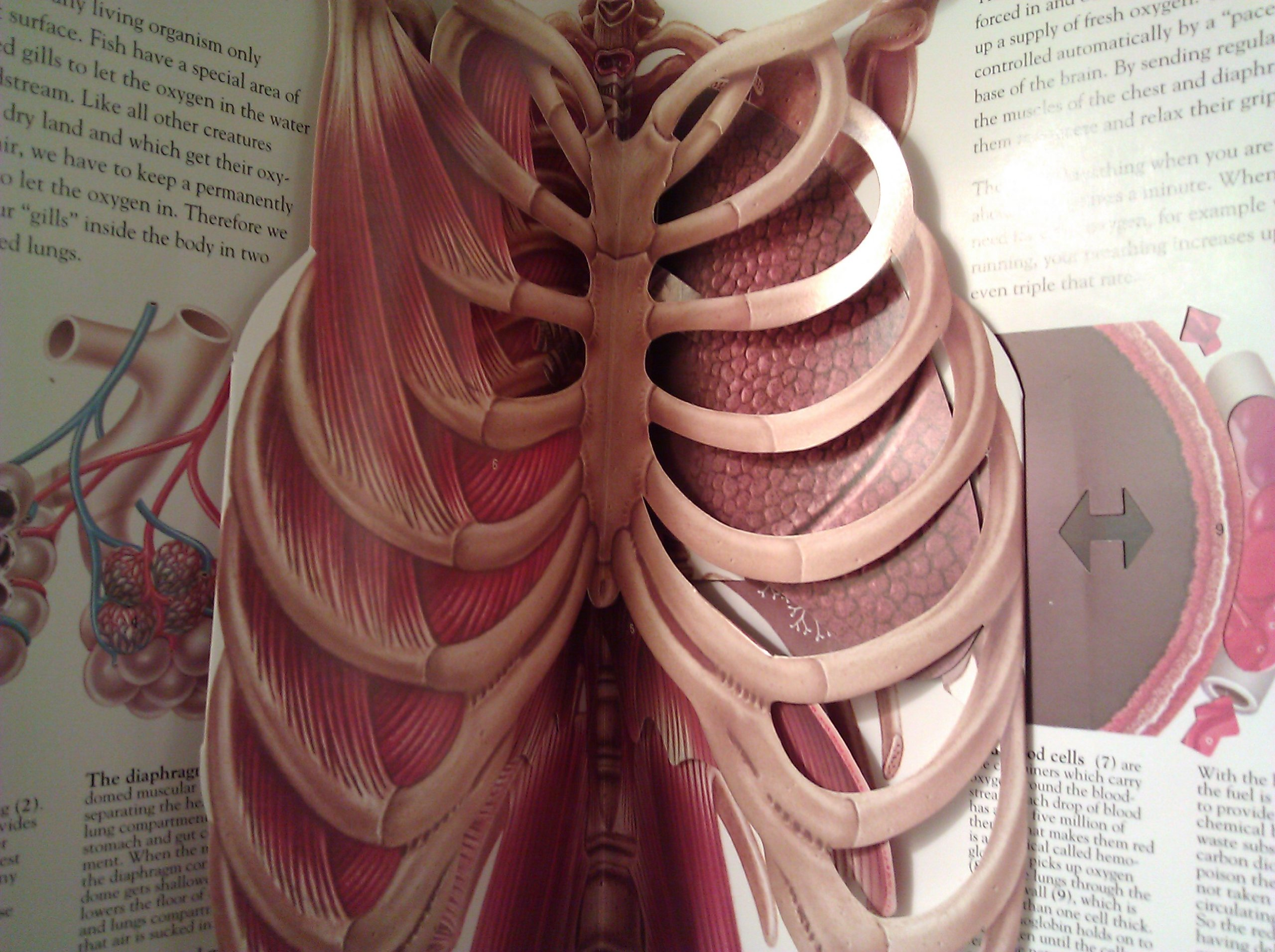 The Human Body Amazon Jonathan Miller Harry Willock David