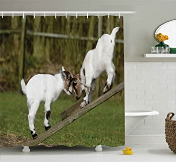 Animal Decor Shower Curtain By Ambesonne, Two Little Baby Goats On A Bench  Fighting With