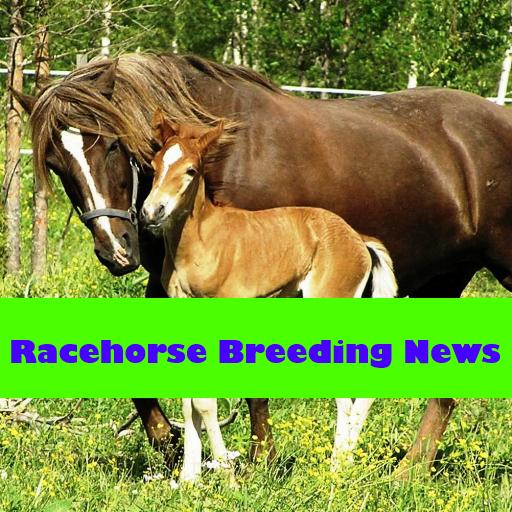 Racehorse (Racehorse Breeding News)