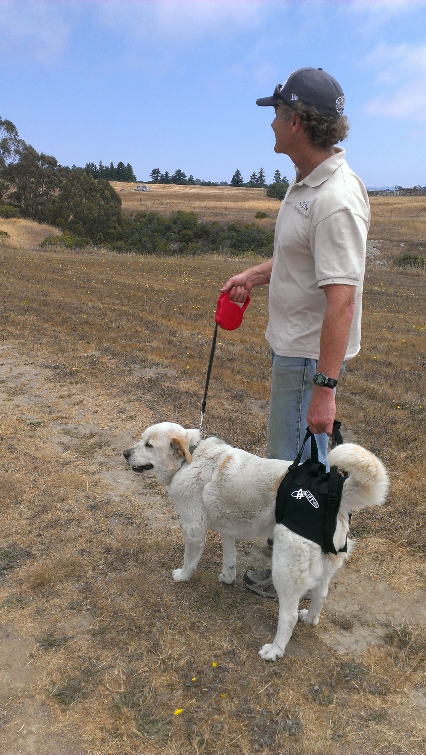 Dog lift support harness:Airlift One Large Walkabout Support Sling