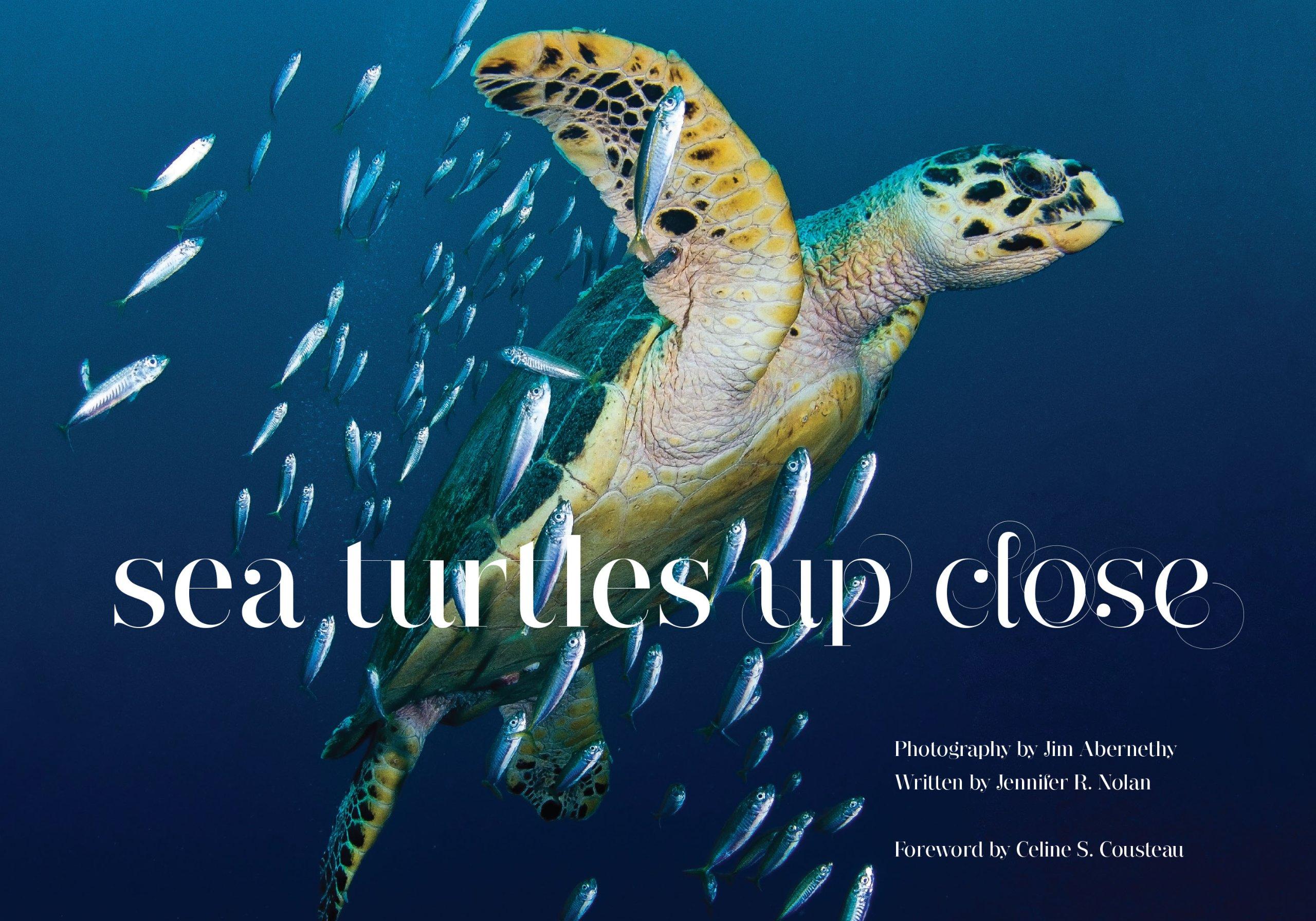 Sea Turtles Up Close Jennifer Nolan Jim Abernethy - Sea turtle coffee table