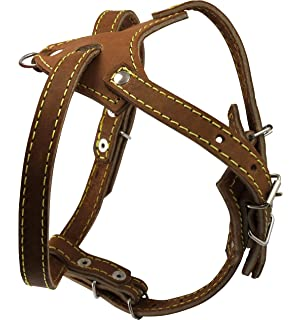 Assured, that Kt so leather harness bad