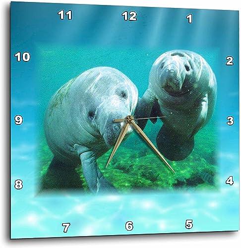 3dRose DPP_39647_2 2 Manatees Looking at You-Wall Clock, 13 by 13-Inch