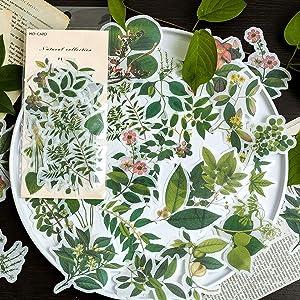 60pcs Laptop Stickers Scrapbook Stickers, Doraking DIY Decorative Green Plants Set Stickers for Laptop,Envelop,Scrapbook,Notebook,Luggage, Glasses(Plants Map)