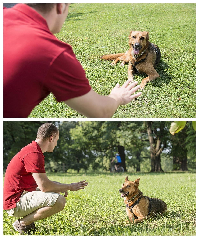 fischietto a ultrasuoni a frequenza regolabile per cani TFENG Fischietto per cani addestramento cani 8 colori