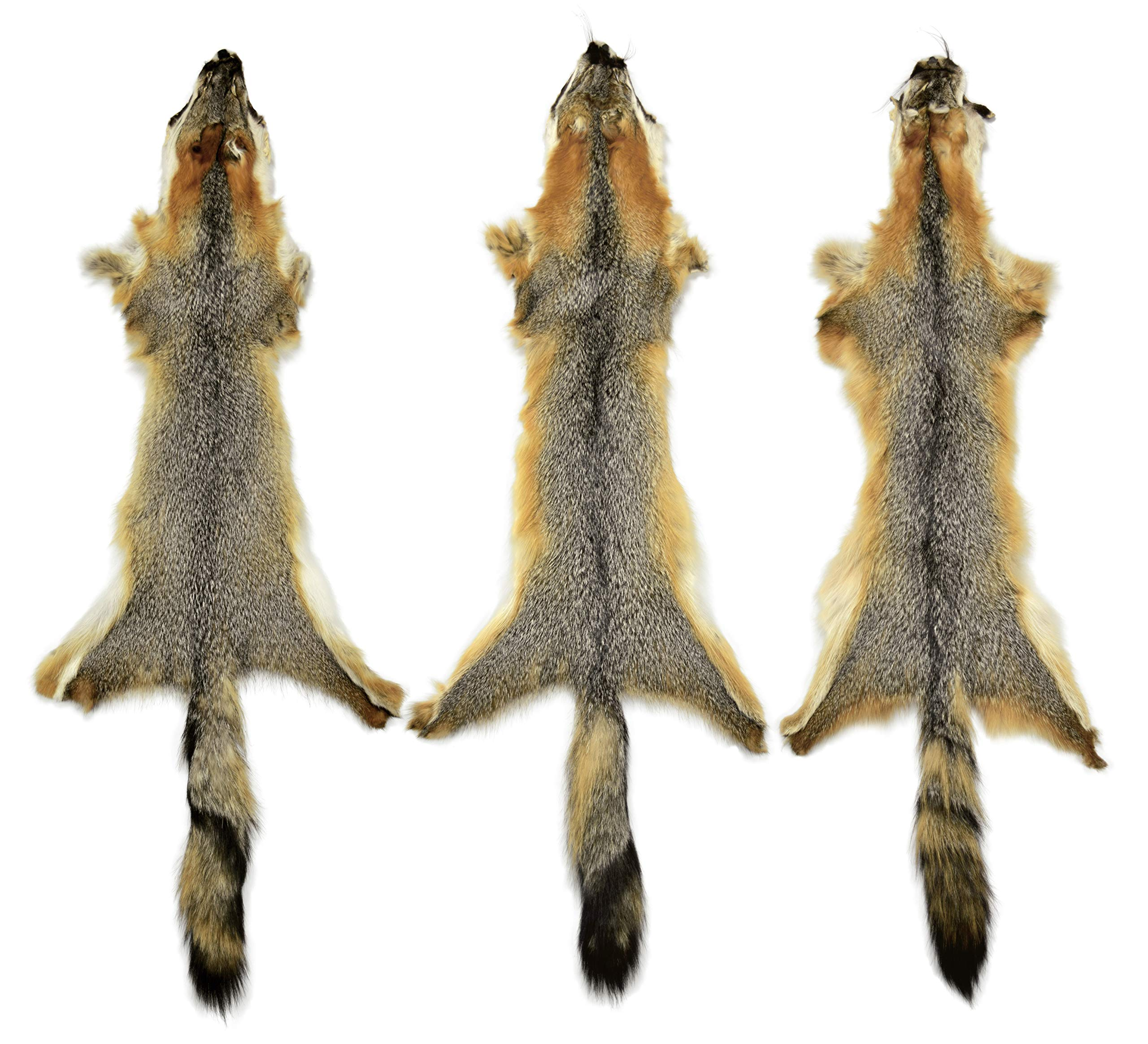 3 Pack AuSable Fur Tanned Grey Fox Fur Pelt with Face and Tail 41'' by AuSable Fur (Image #1)