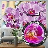 Orchidee FOTOMURALE – Orchidee fiori tappezzeria da parete- bei fiori quadro - XXL decorazione da parete by GREAT ART (210 x 140 cm)