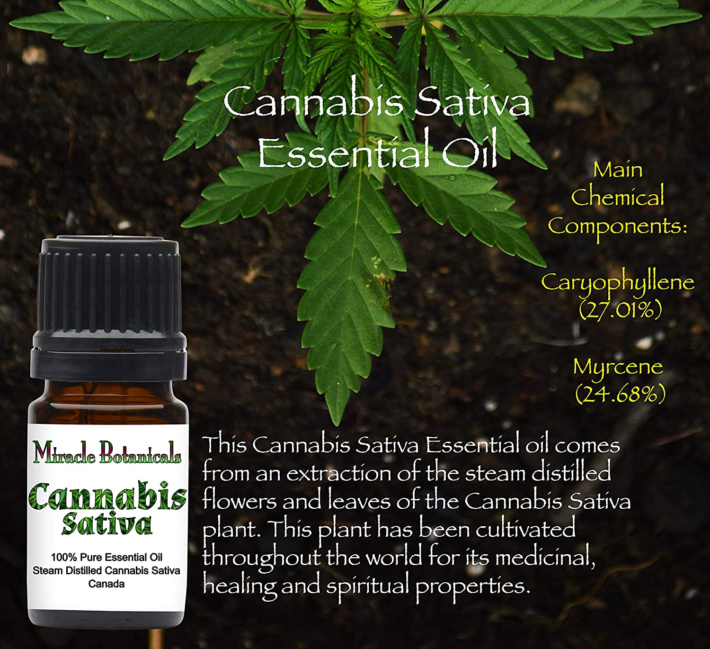 Miracle Botanicals Cannabis Sativa Essential Oil - 100% Pure Cannabis  Sativa - Therapeutic Grade - 5ml