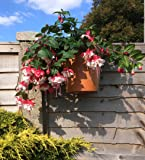 "Fence Hooks, 6 plant pot hangers to hang 6"" pots on fences........ Ideal for big dreams,small spaces !"