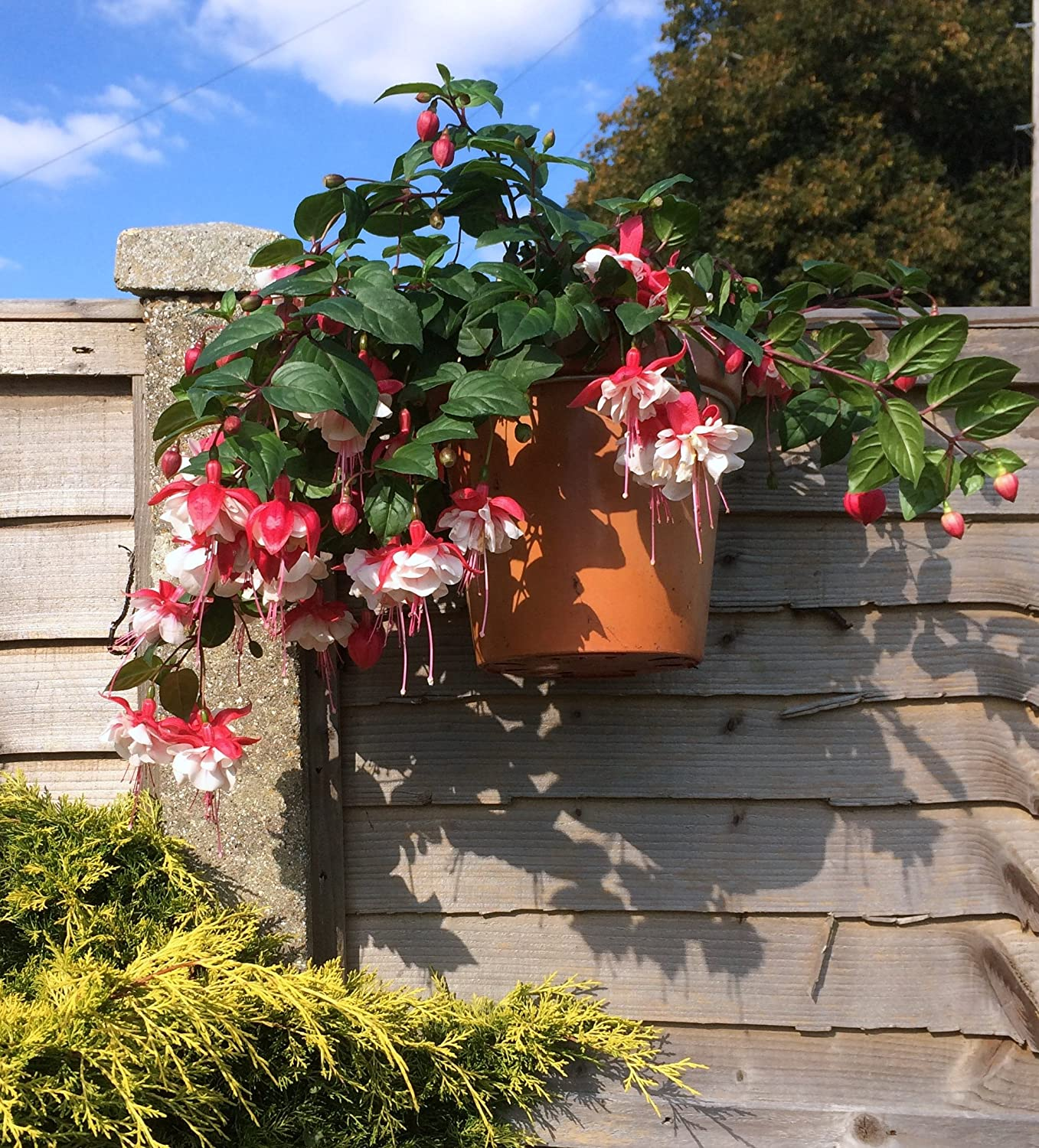Fence Hooks, 6 plant pot hangers to hang 6\