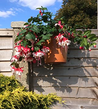 FENCE PANEL PLANT POT HOLDERS HANG 7u0026quot; POTS ON FENCES OR POSTS MAKE HERB  GARDEN