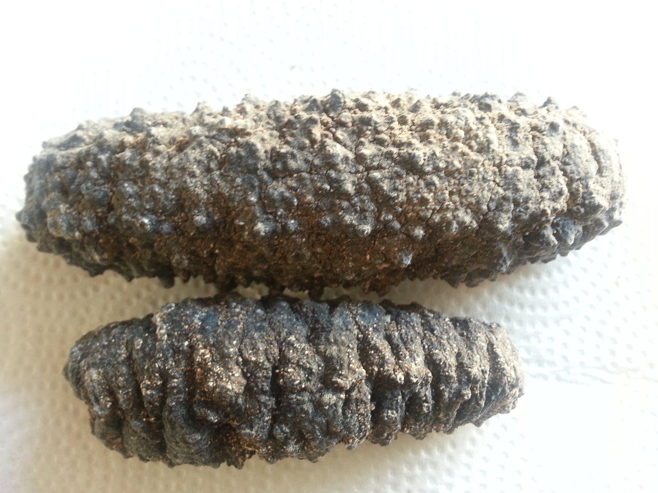 ERLIN Sea Cucumber Natural Sun Dried Badionotus Leechy 5 Pounds