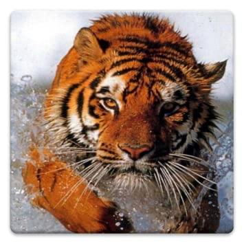 Amazon Animal Wallpapers Appstore For Android