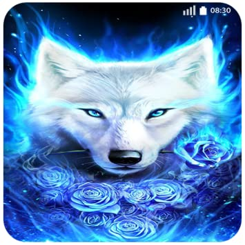 Amazon Com Husky Fire Wolf Wallpaper 4k New Images Locker