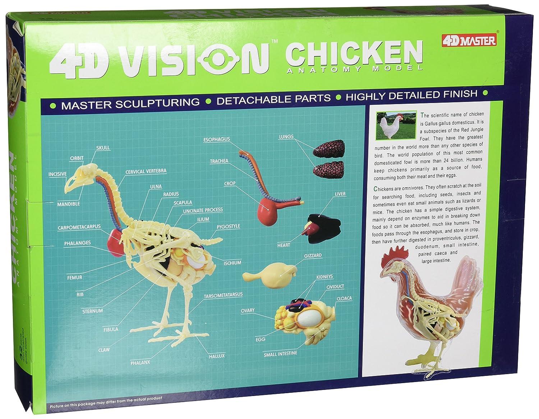 Amazon.com: Famemaster 4D Vision Chicken Anatomy Model: Toys & Games