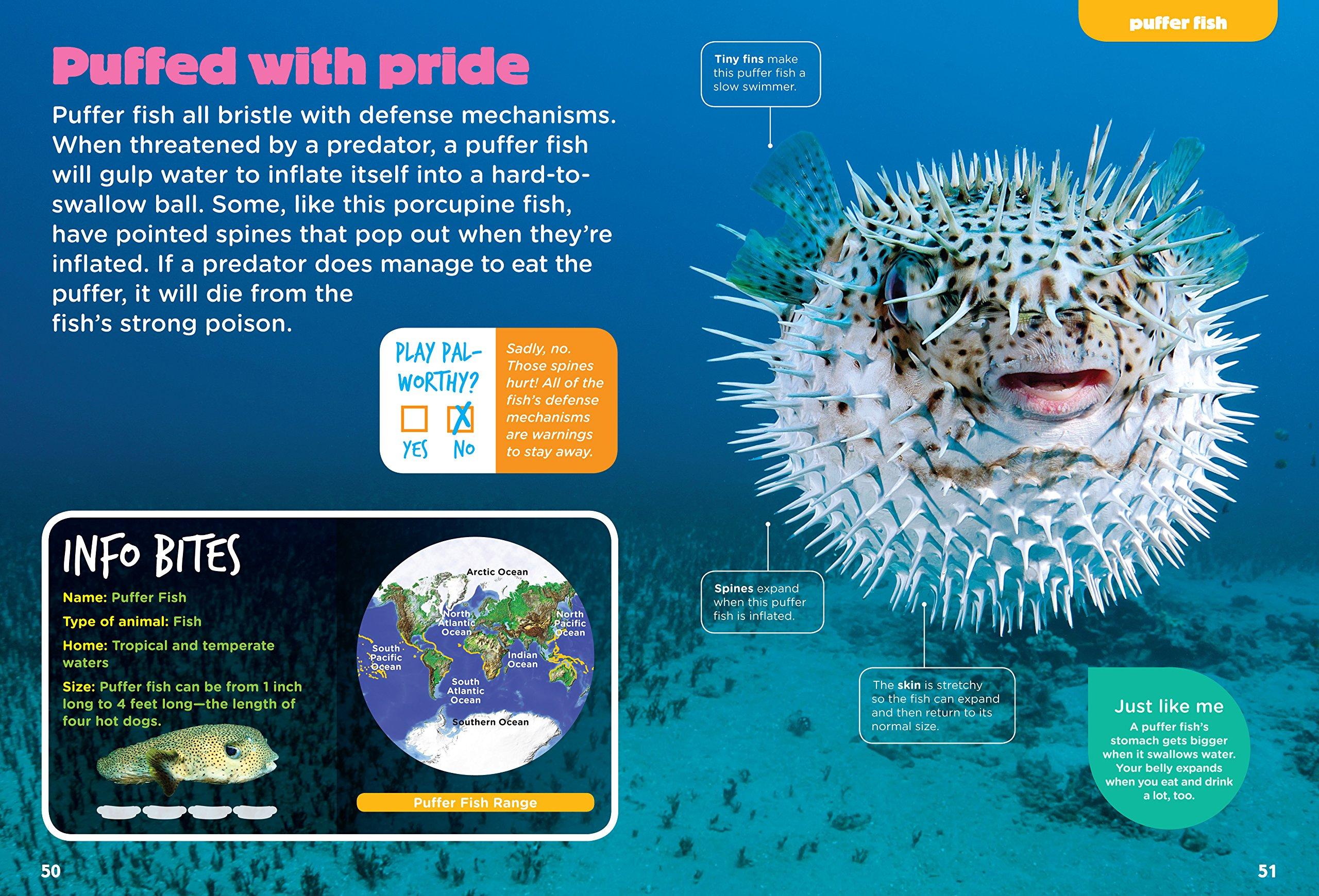 Ocean Animals (Animal Planet Animal Bites) by Animal Planet (Image #4)