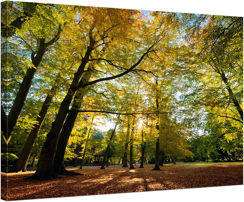 Bilderdepot24 Cuadros en Lienzo Las Hojas Que Caen en otoño - 200x80 cm 5 Piezas - Enmarcado Listo Bastidor Imagen. Directamente Desde el Fabricante: Amazon.es: Hogar