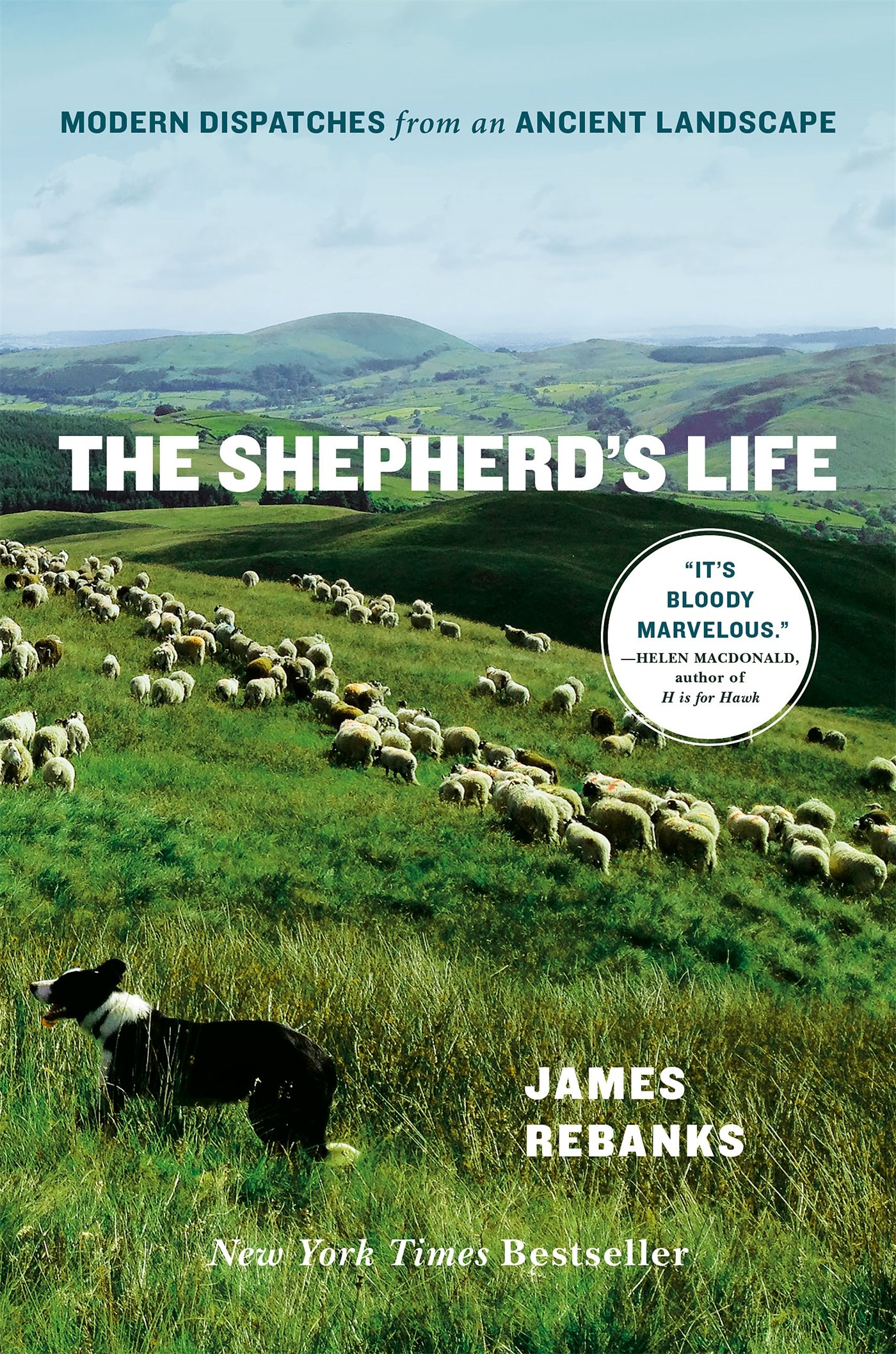 Download The Shepherd's Life: Modern Dispatches from an Ancient Landscape pdf epub
