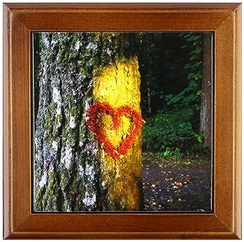 Amazon com: 3dRose ft_93421_1 Oregon, Mt  Hood NF, Douglas-Fir Tree